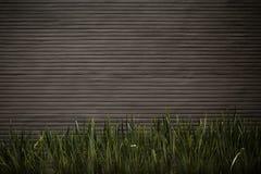 Muro di cemento con le piante Immagine Stock