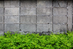 Muro di cemento e pianta Immagine Stock