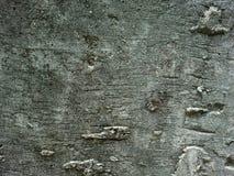 Muro di cemento grigio Immagine Stock Libera da Diritti