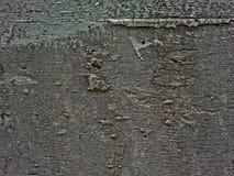 Muro di cemento grigio Immagine Stock