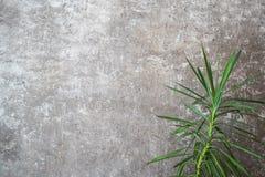 Muro di cemento interno con il fiore Fotografia Stock Libera da Diritti