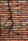Muro di mattoni arancio con l'albero della radice Fotografia Stock Libera da Diritti