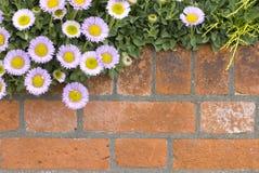 Muro di mattoni con i fiori Immagini Stock