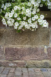 Muro di mattoni con i fiori d'attaccatura Fotografia Stock