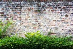 Muro di mattoni con il cespuglio Fotografia Stock Libera da Diritti