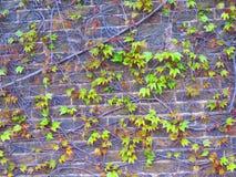 Muro di mattoni con il modello delle foglie Immagine Stock