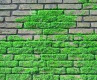 Muro di mattoni coperto di moos Fotografie Stock Libere da Diritti
