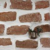 Muro di mattoni e pino fotografia stock libera da diritti