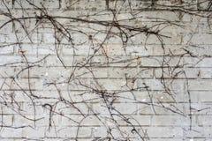 Muro di mattoni grigio 1 Fotografia Stock