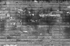 Muro di mattoni grigio muscoso per fondo 5 Fotografia Stock
