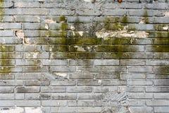 Muro di mattoni grigio muscoso per fondo 4 Fotografia Stock