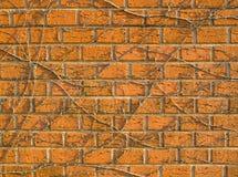 Muro di mattoni invaso Fotografia Stock