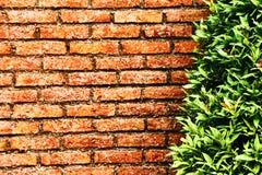 Muro di mattoni rosso davanti ad un cespuglio verde fotografie stock