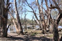 Murray River Imagem de Stock Royalty Free