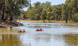 Murray River Australia royaltyfri foto