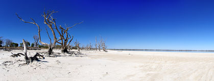 Murray river basin. Dead trees and parched earth of Murray River basin, Australia stock image