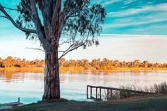 Murray River kuster på solnedgången royaltyfri bild