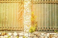 Murs avec l'élevage d'arbres Image stock