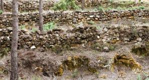 Murs dans la forêt Images stock