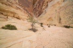 Murs de canyon convergents dans la vallée du feu Nevada Photographie stock libre de droits
