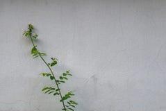 Murs de plâtre d'arbre Image stock