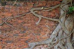 Murs et arbres Images libres de droits