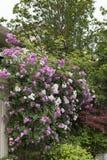Murs et portes plantés de fleurs Photo libre de droits