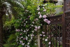 Murs et portes plantés de fleurs Photographie stock libre de droits