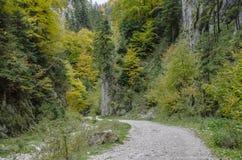 Murs raides de roche en gorge de Zarnestiului Photographie stock