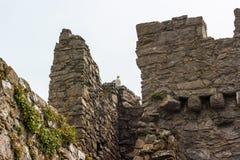 Murs ruinés avec la mouette d'harengs Photos stock