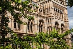 Musée d'histoire naturelle à Londres Image libre de droits