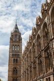 Musée d'histoire naturelle à Londres Photos stock