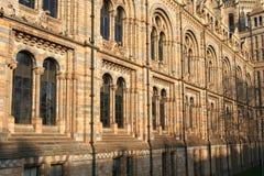 Musée d'histoire naturelle Image stock