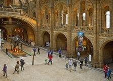 Musée d'histoire naturelle photo stock