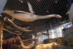 Musée d'histoire naturelle de Changhaï Photo libre de droits
