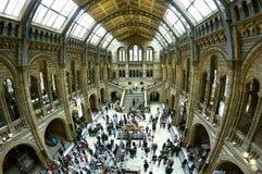 Musée d'histoire naturelle de Londres, hall central. Images stock