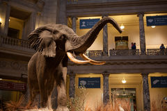 Musée d'histoire naturelle de Smithsonien, C.C Image libre de droits