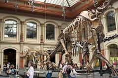Musée de dinosaur image libre de droits