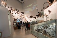 Musée de Melbourne Image libre de droits