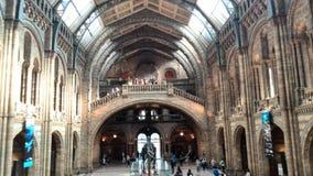 Musée Londres d'histoire naturelle Photos libres de droits