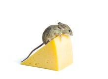 Mus med ost Arkivfoton