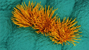 Mus multiciliated celler Royaltyfri Fotografi