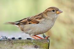 Mus in vogellijst Royalty-vrije Stock Afbeeldingen