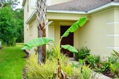 Musa basjoo, Japanese Banana tree. Taken in Tampa Florida Royalty Free Stock Images