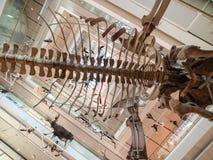 `-MUSA`en är museet av vetenskap i Trento Royaltyfri Bild
