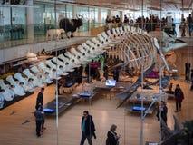 `-MUSA`en är museet av vetenskap i Trento planlade vid den italienska arkitekten Renzo Piano Royaltyfri Fotografi