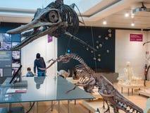 `-MUSA`en är museet av vetenskap i Trento planlade vid den italienska arkitekten Renzo Piano Arkivfoton