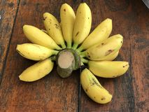Musa sapientum or Plantain banana. Royalty Free Stock Photos