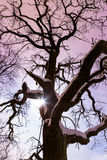 Musardez l'éclat par le grand arbre de conte de fées la nuit Image libre de droits