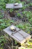 Musblockeringar på trädgårds- lawn arkivbilder